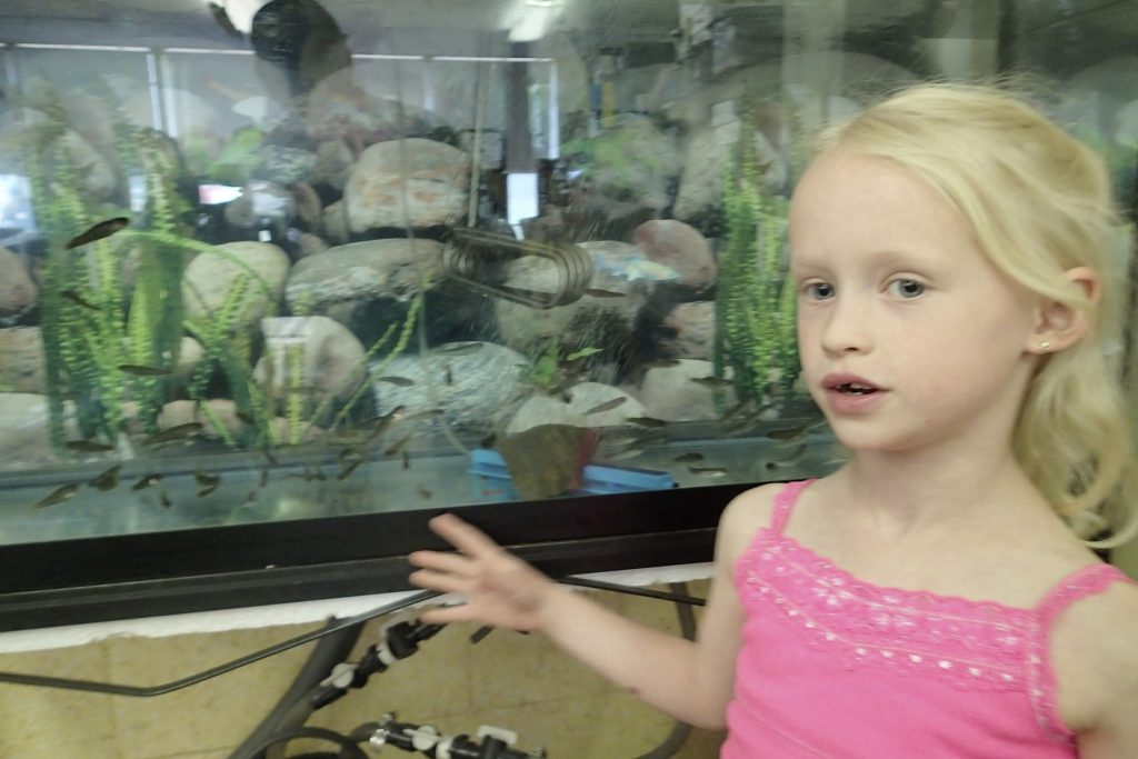 Young student showing fish tank in the classroom